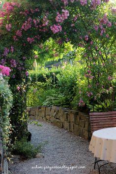 All you need.... - Ein Schweizer Garten Stachellose, einmalblühende Kletterrose Veilchenblau