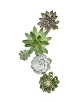 succulents | STILL (mary jo hoffman)