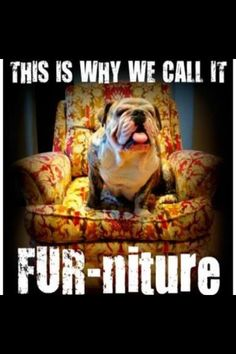 So true !!! #englishbulldog #dogs