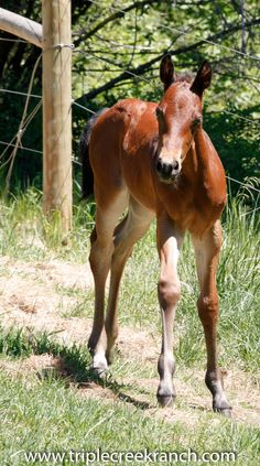 New Colt at Triple Creek Ranch needs a name!