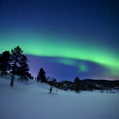Metaverse Aurora Borealis and A Shooting Star in The Woods of Troms County, Norway by Arild Heitmann, Stocktrek Images Canvas Art Wall Art Prints, Poster Prints, Canvas Prints, Wall Mural, Polar Climate, Shooting Stars, Aurora Borealis, Canvas Artwork, Online Art