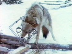 no words needed to describe this kind of obscene cruelty, speaks for itself.