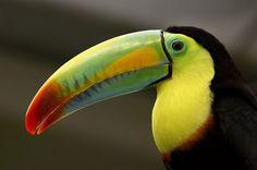 Aves de pico largo