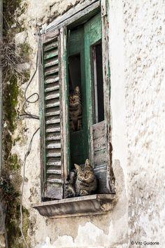 by vito75 [cats in window]