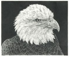 What are some examples of other people's pencil drawings which you appreciate and admire? - Quora