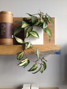 Simple, vine style plant - leaves are great size