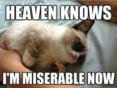 Grumpy Cat loves The Smiths.