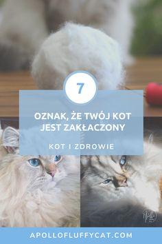 Żadnych objawów nie wolno bagatelizować, bo zakłaczenie jest niebezpieczne dla kociego zdrowia. Dowiedz się jak rozpoznać objawy zakłaczenia u kota.