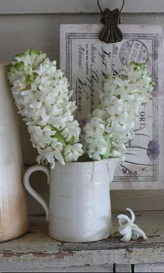 Hyacinth - meaning: constancy of love