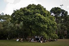 Ibirapuera park TL P