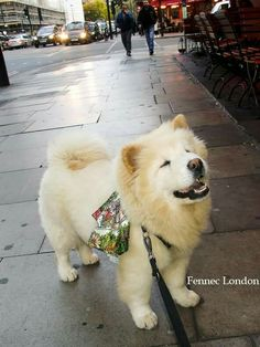 Smile! It might be Monday but it's less then 2 months before Christmas! The cutest #chowchow Haloumi @nunuvapestore wears a sweet Fennec London #silk #scarf.  To get your pet a Fennec London silk scarf go to www.fenneclondon.com  #fenneclondon #fenneclondonpet #silkscarf  #streetstyle #styleblogger #styling #style #dog