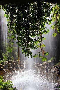 Crystal Shower Falls in Dorrigo National Park near Coffs Harbour NSW Australianal Park near Coffs Harbour Waterfall way NSW Australia The Places Youll Go, Places To See, Beautiful World, Beautiful Places, Tres Belle Photo, Foto Art, Roadtrip, Belleza Natural, Go Camping
