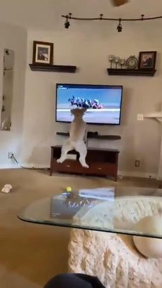 Funny Laugh, Haha Funny, Funny Animal Videos, Funny Animals, Cuddle Love, Emoji Combinations, Goofy Dog, Clever Kids, Horse Videos