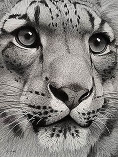 """Snow Leopard""  By Wildlife Artist Jim A. Hall"