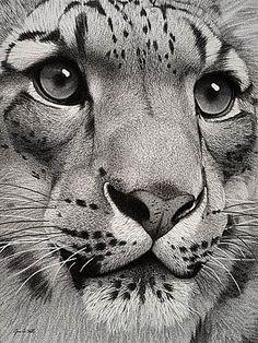 """Snow Leopard"" By Wildlife Artist Jim A. Hall"