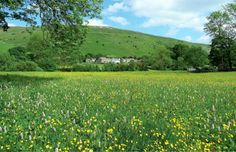 Flower meadows show the Yorkshire Dales in their true colours | Great British Life