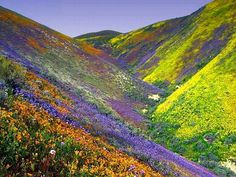 Valley of Flowers in India. I am obsessed with flowers and this is amazing!!