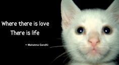 "Kitten Aries with Gandhi quote: Where there is love there is life."" -- cat, kitty, feline, kitten, face, close up, furkid, loving, need love, inspire, cat lover, pet parent, cute, dorable, inspirational, quote, saying, google theme, meme, photo."