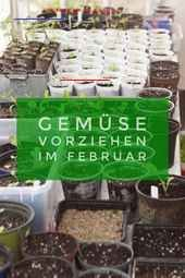 Pflanzen vorziehen im Februar. Wer besondere Gemüsesorten ernten will muss selb… Prefer plants in February. Those who want to harvest special vegetables must sow themselves. Eggplant, chili and pepper plants can be preferred on the windowsill in February. Garden Types, Herb Garden Design, Garden Ideas, Vegetable Garden, Garden Plants, Indoor Plants, Types Of Vegetables, Growing Vegetables, Suculentas Diy