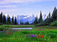 montana wildflower landscape   Alpine Wildflowers Rocky Mountains British Columbia Flowers