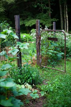 I think a little ole' gate would add a touch of garden whimsy to my cottage garden to the veggie patch entry.