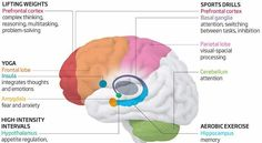 How physical activity affects the brain.......bet you didn't know