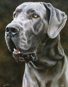 SAMPLE PET PORTRAIT Great Dane, 16x20 inches size, FINEST QUALITY  Custom pet portraits as oil paintings on stretched canvas, from your photographs.  Getting a great likeness of your dog really matters to me, rather than just a pleasing painting. It's about me connecting with your much loved dog the best I can just with your photos.   ******* I ALWAYS AIM FOR A HIGH QUALITY PAINTING AND DOG LIKENESS. IF YOU ARE NOT HAPPY WITH THE FINISHED PIECE, I WILL REFUND YOU IN TOTAL PRIOR TO SHIPPING…