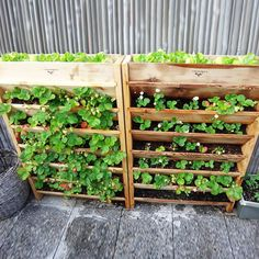 Repurposed wooden pallet vertical gardening planter