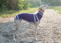 одежда для собак уиппет: 20 тыс изображений найдено в Яндекс.Картинках