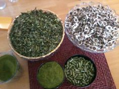 The Natures Medicine cabinet, Moringa Oleifera, with all its benefit is life saver. Moringa Recipes, Moringa Benefits, Alternative Health, How To Dry Basil, Natural Health, Natural Remedies, Herbalism, Healthy Lifestyle, Herbs