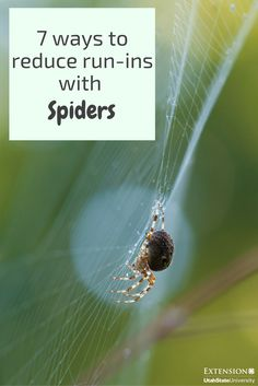 One of many great free stock photos from Pexels. This photo is about macro, spider, spiderweb Free Pictures, Free Images, Black Spider, Free Stock Photos, Animals And Pets, Amazing, Plants, Spiders, Pest Management