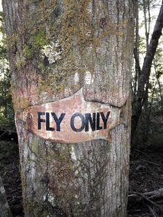 Fly only