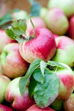 dagmars_kitchen_äpplen_närbild