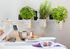 macetas hechas con botellas de plastico de Bezoya para plantas aromáticas