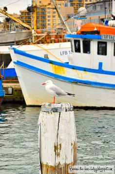 Solo Seagull at the Sydney Fish Markets - I ate a delicious meal here. Would love to go when Hadley is older.