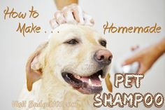 We're not fans of chemicals in our own shampoo, so we're not about to use them on our beloved pets either! Here is a simple recipe to make your own pet shampoo that is gentle on the skin and not loaded with harsh chemicals. (Click on Photo for More)
