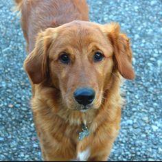I love my dog....Rusty!