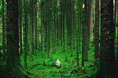 Hiker, Scottish Highlands.  By Luis del Río.