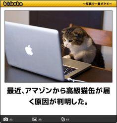 最近、アマゾンから高級猫缶が届く原因が判明した。