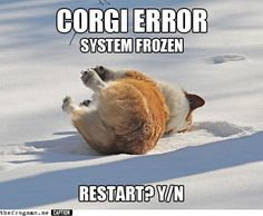 Google Image Result for http://static.themetapicture.com/media/funny-Corgi-playing-snow.jpg