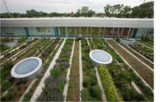 Gary Comer Youth Center Green Roof