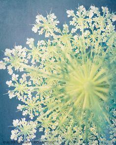 Nature Photography Print, Queen Ann's Lace, Dusk Blue, Chartreuse Green, Nature Art, Wall Art, Home Decor, Flower Photograph, Fine Art Print. $25,00, via Etsy.