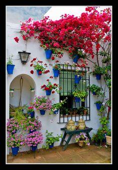 All sizes | 0202 rincon tipico (patios cordoba) | Flickr - Photo Sharing!