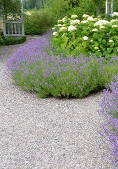 curvaceous classical lavender hedge against the gravel path. Lake Garden, Porch Garden, Gravel Garden, Dream Garden, Garden Paths, Gravel Walkway, Pea Gravel, Hydrangea Landscaping, Hydrangea Garden