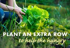 great idea! Gardening, garden for the hungry, plant an extra row and donate.  plant a row, grow a row, growing food, growing extra