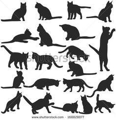 Vector silhouettes of cats collection by Fricke Studio, via Shutterstock Cat Silhouette Tattoos, Black Cat Silhouette, Silhouette Images, Animal Silhouette, Silhouette Vector, Dog Vector, Free Vector Art, Silhouettes, Wall Stencil Patterns