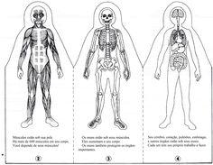 Livro do corpo dobrável 1