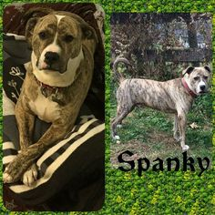 Meet Spanky! The Spankster! Don't let that intellectual pose fool you...he loves to play.