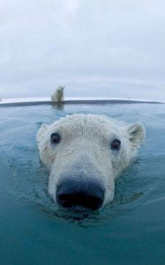 if raymond was a bear