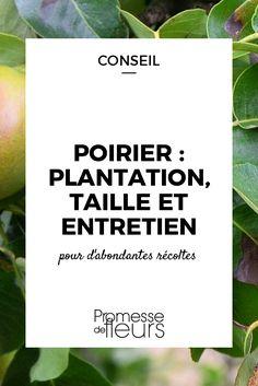 Le Poirier est l\'un des arbres fruitiers les plus plantés au jardin. Où le planter, comment le tailler et soigner les éventuelles maladies : nos conseils.